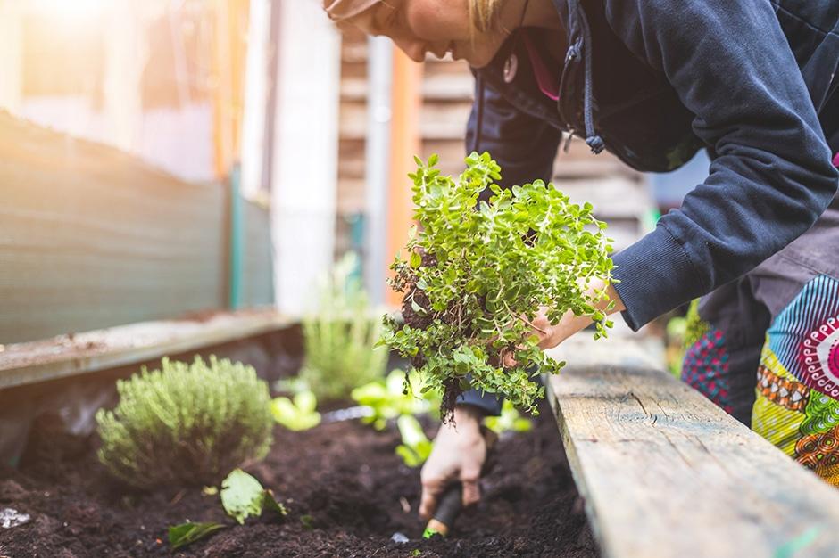 gardening in recovery